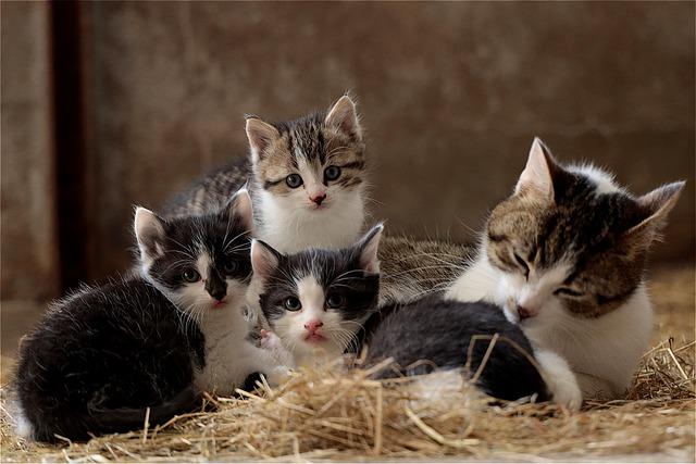 Do Kittens Miss their Siblings?