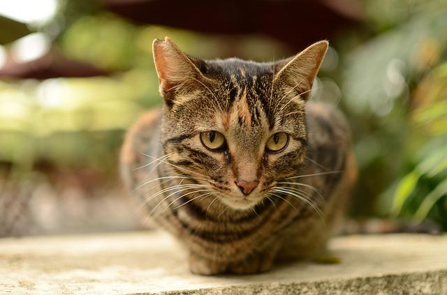 Brindled Cats